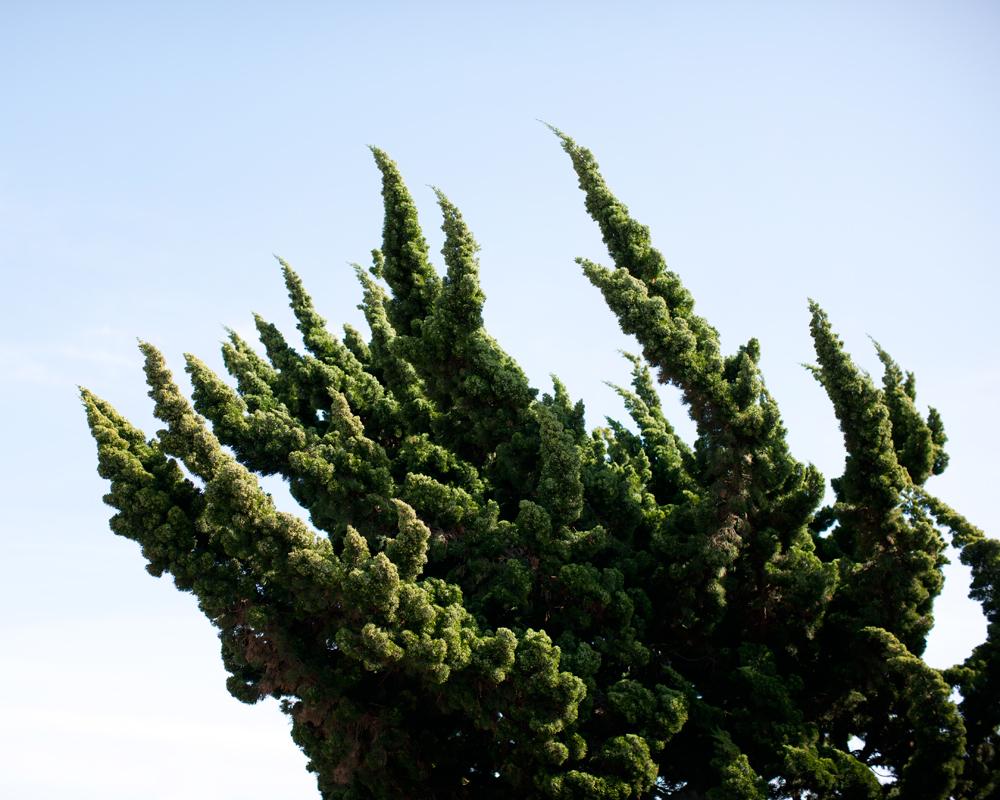 http://westoncolton.com/files/gimgs/23_wclaguna-tree1756-800px.jpg